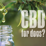 Straightforward Actions To Cbd Oil For Pet Dogs Of Your Desires